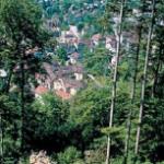 Vortrag: Biodiversität im Urner Wald am 26. September