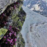Skitour SAC Lucendro – Pizzo Lucendro ab Gotthardpass 26.05.2018